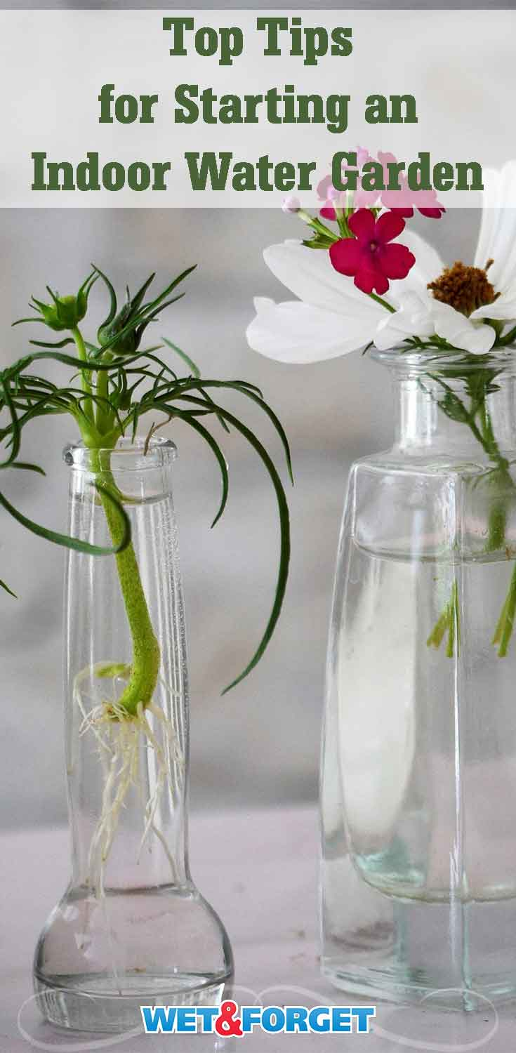 Looking for unique decor for your home? Try out creating an indoor water garden! Follow these helpful tips to get started.
