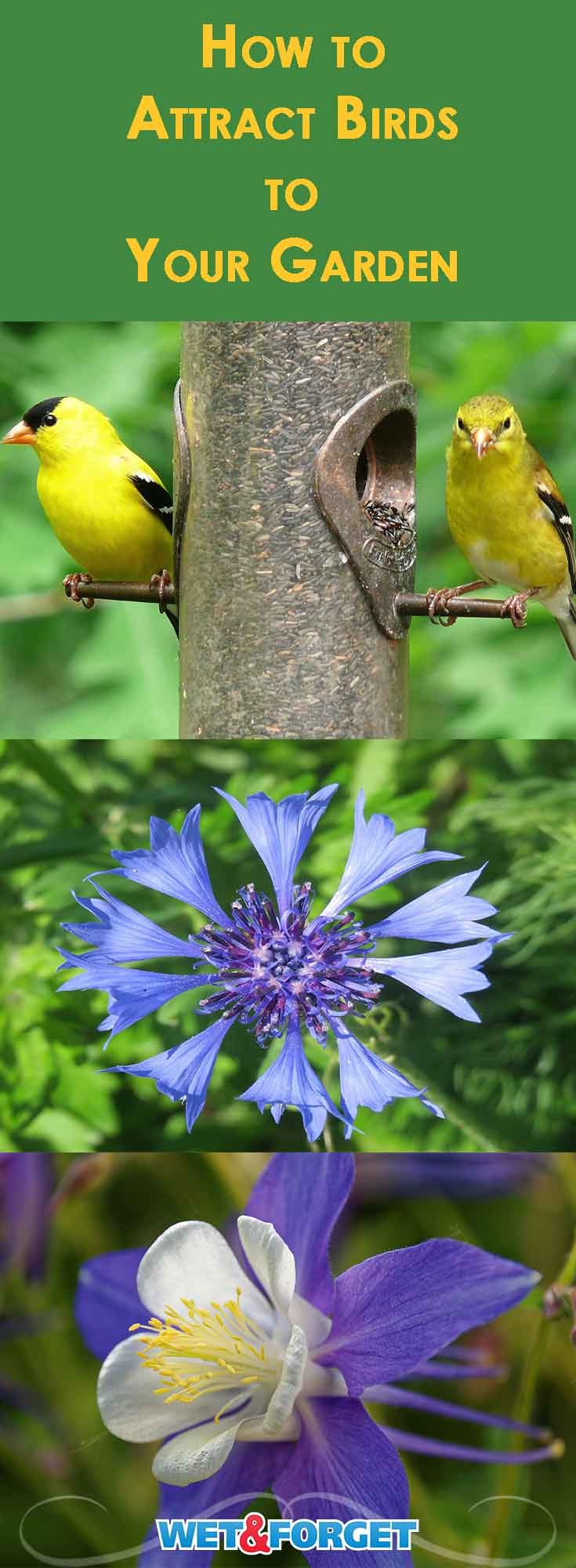 Attracting birds to your garden is so easy! Our guide explains which flowers and accessories can attract more birds to your garden.