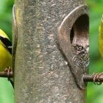 Attract Birds to Your Garden with a Few Easy Additions