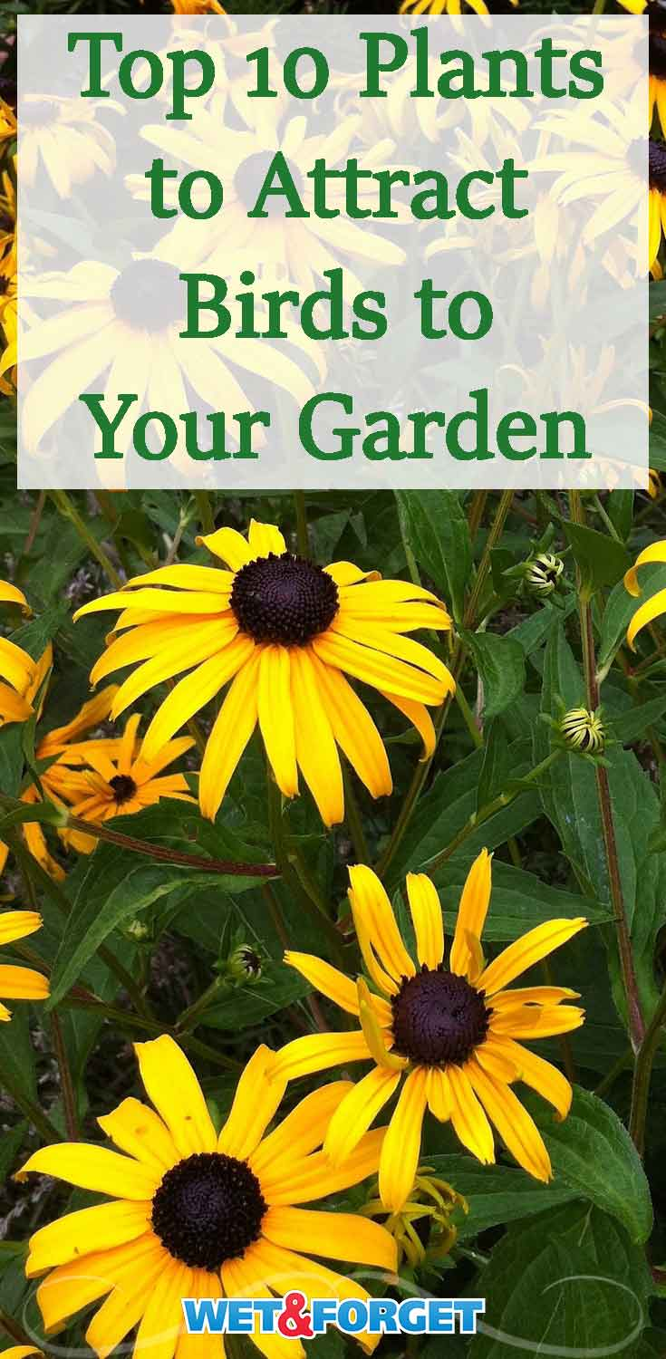 Birds will flock to your garden by adding these beautiful trees and flowers to your backyard.