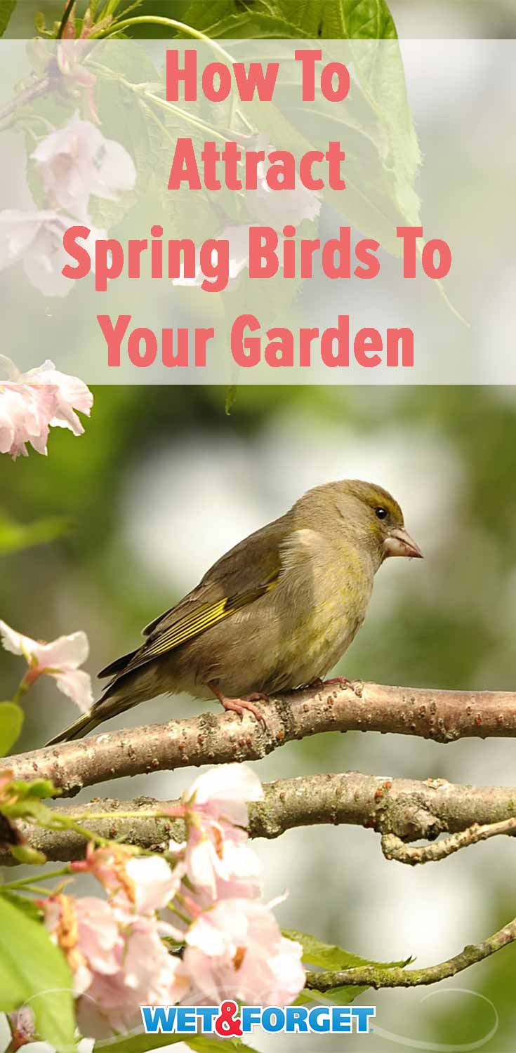 Discover which flowers attract spring birds to your garden with our helpful guide!