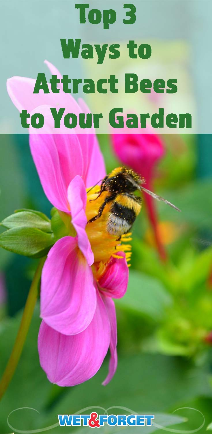 Bring bees to your garden with these three tips!