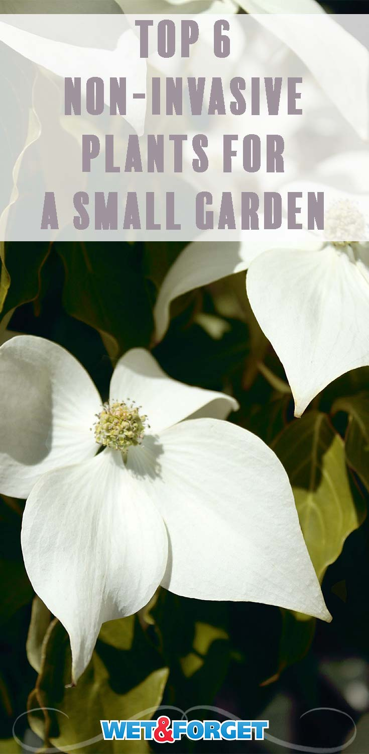 Pick out the best plants for your small garden with our non-invasive plant guide!