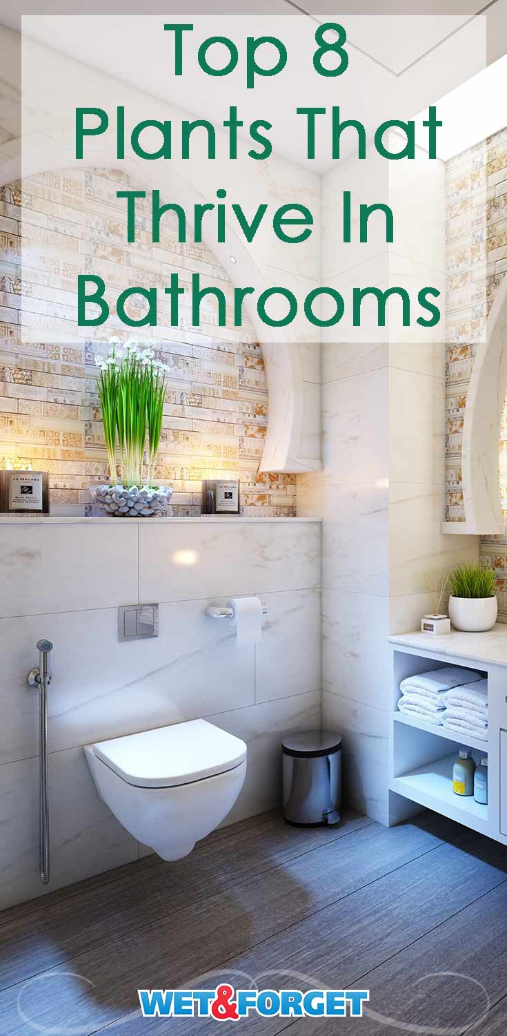 Thinking of adding some greenery to your bathroom? Discover which plants thrive in this enviroment.