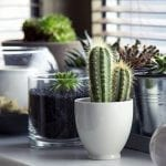 The Stickler's Guide to Growing a Cactus Indoors