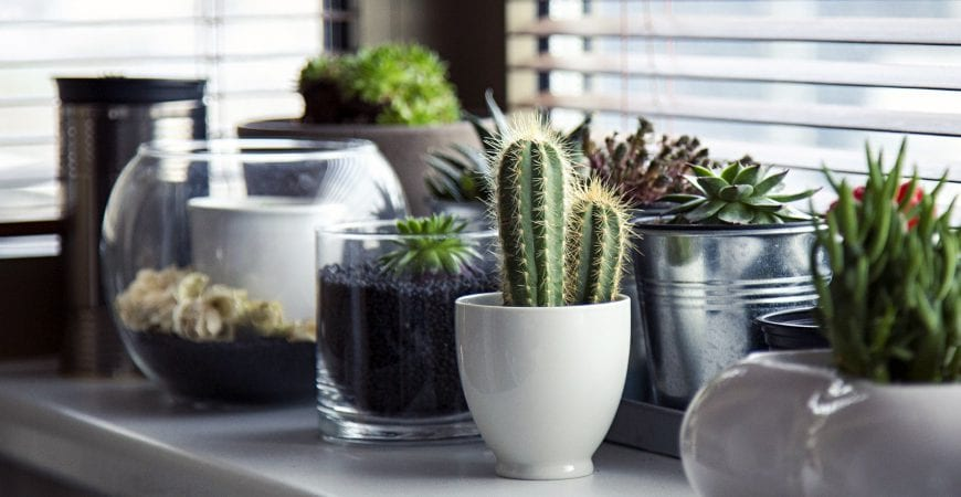 Image result for cactus indoors
