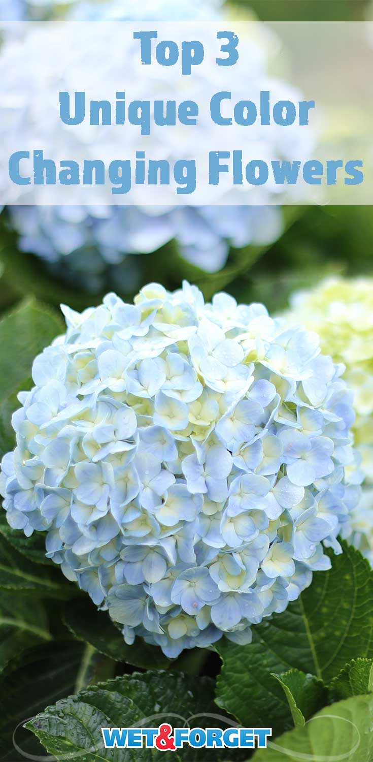 Give your garden a new look with these color changing flowers!