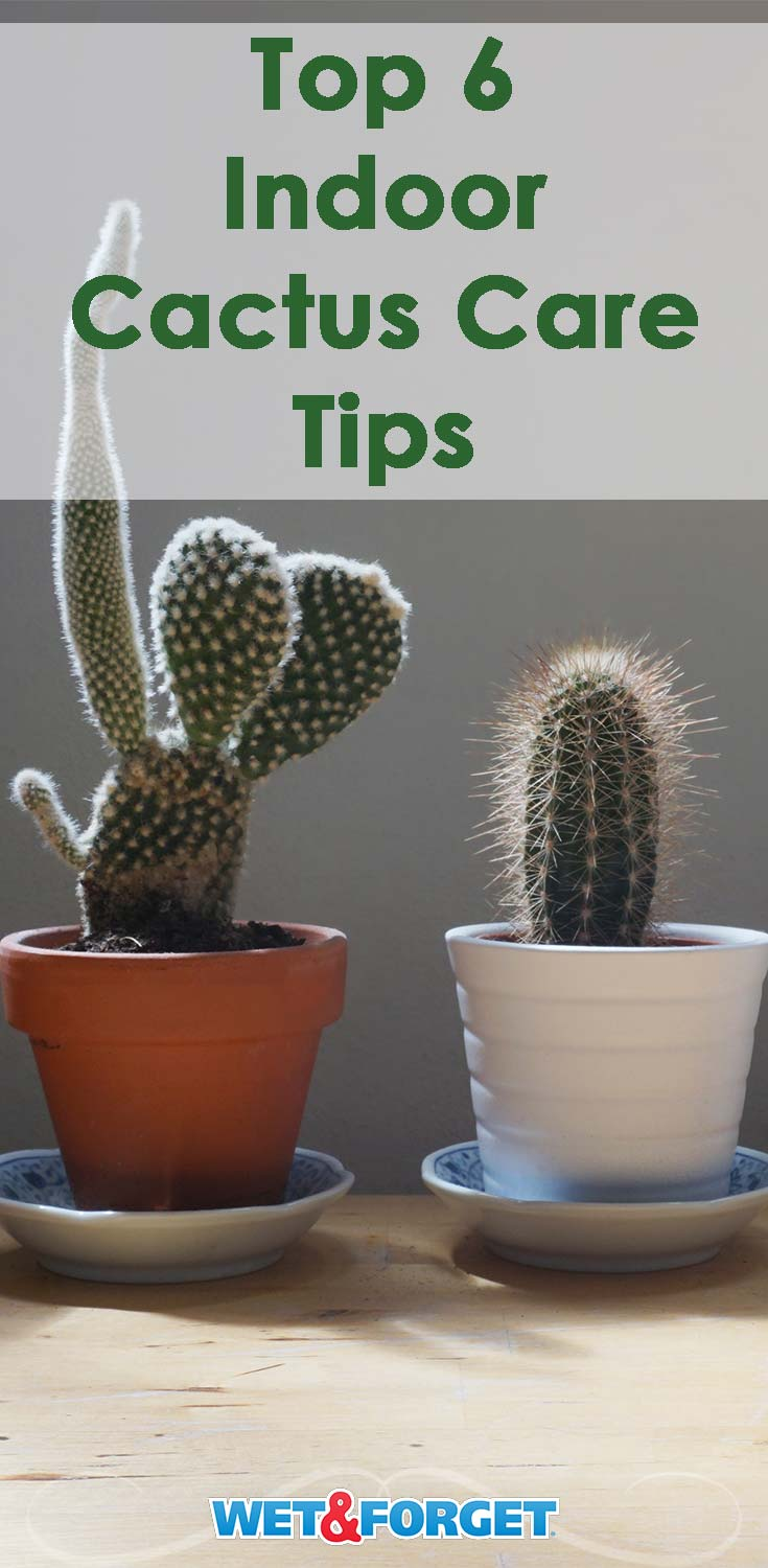 Caring for your indoor cactus is easy when following these 6 essential tips!
