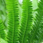 Grow Ferns Indoors: A Quick Guide to Adding Greenery to Your Home