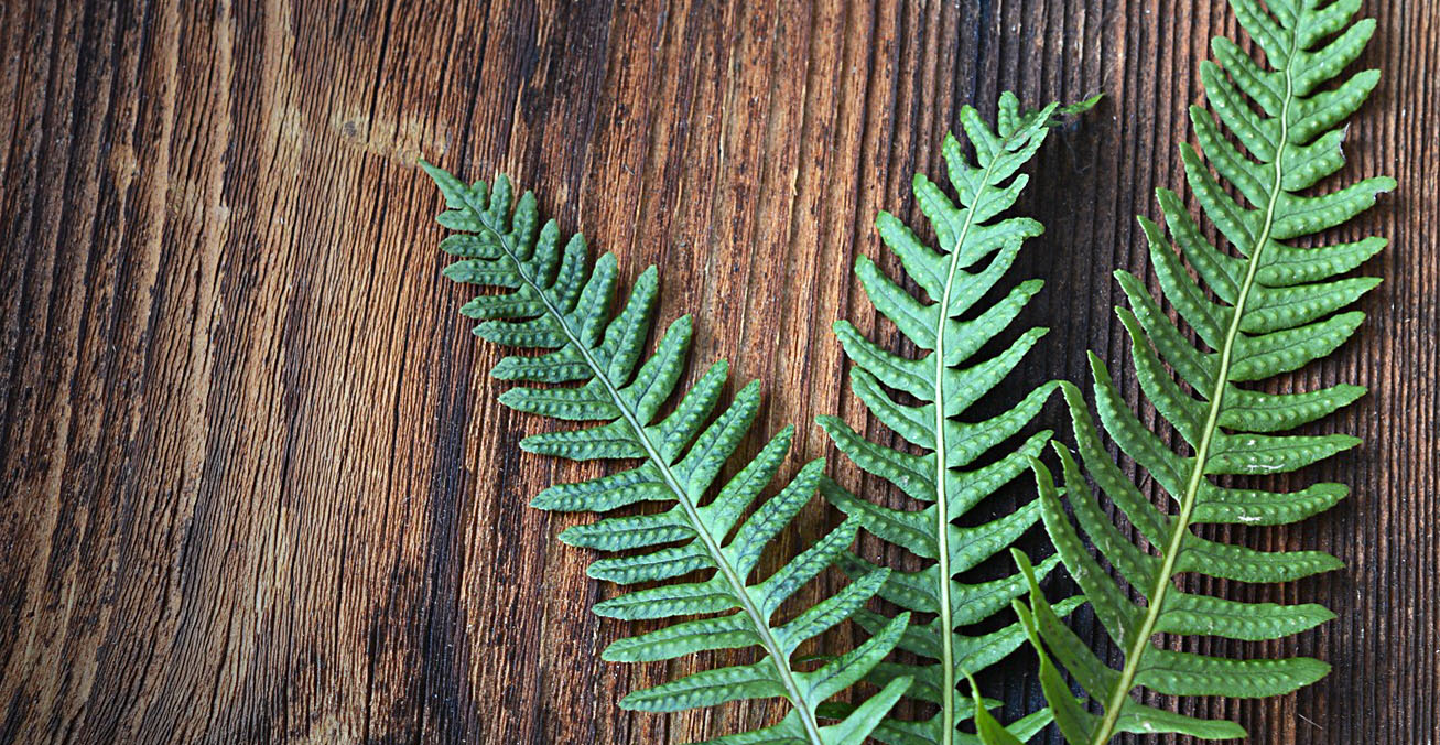how to grow ferns indoors