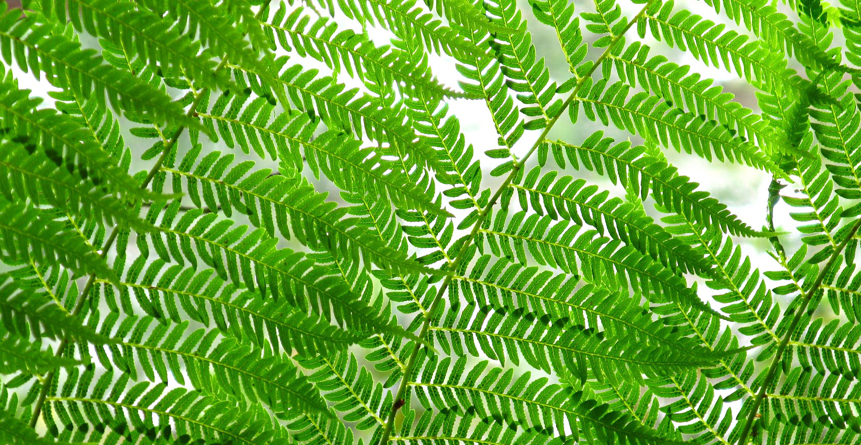 how to grow fern from spores