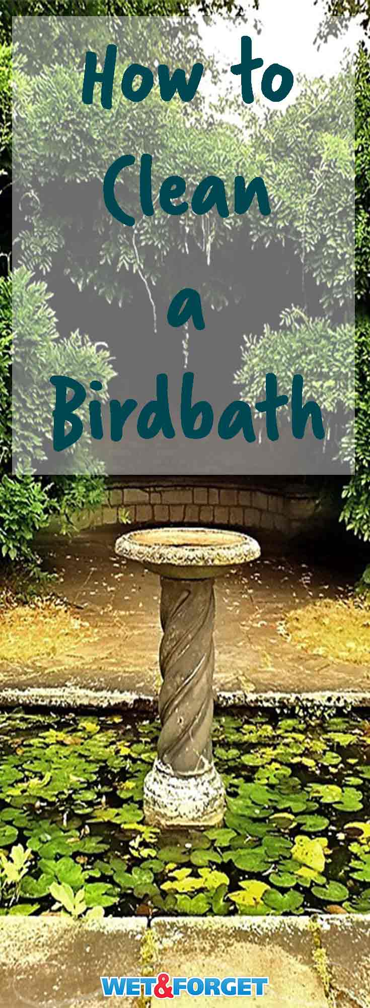 A clean birdbath is a welcome sign for birds of any kind. Learn how to clean your birdbath with these easy steps!