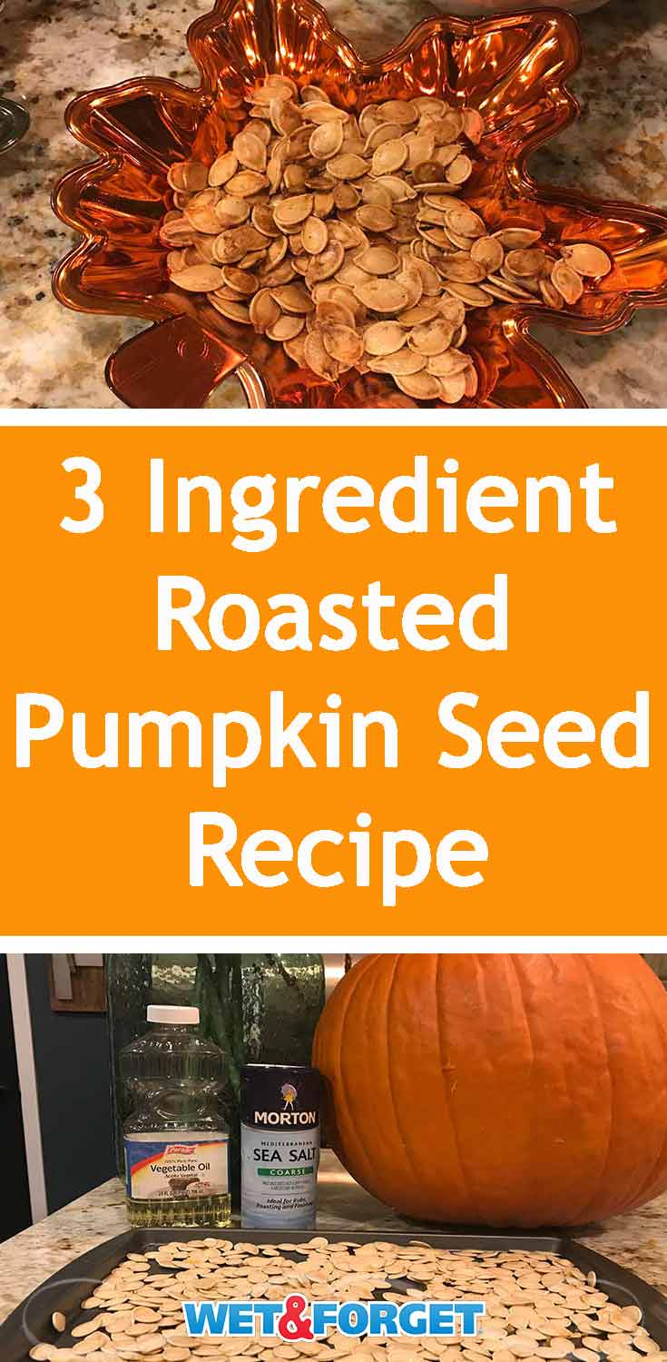 Use this quick fall recipe to make the best roasted pumpkin seeds with only 3 ingredients needed!