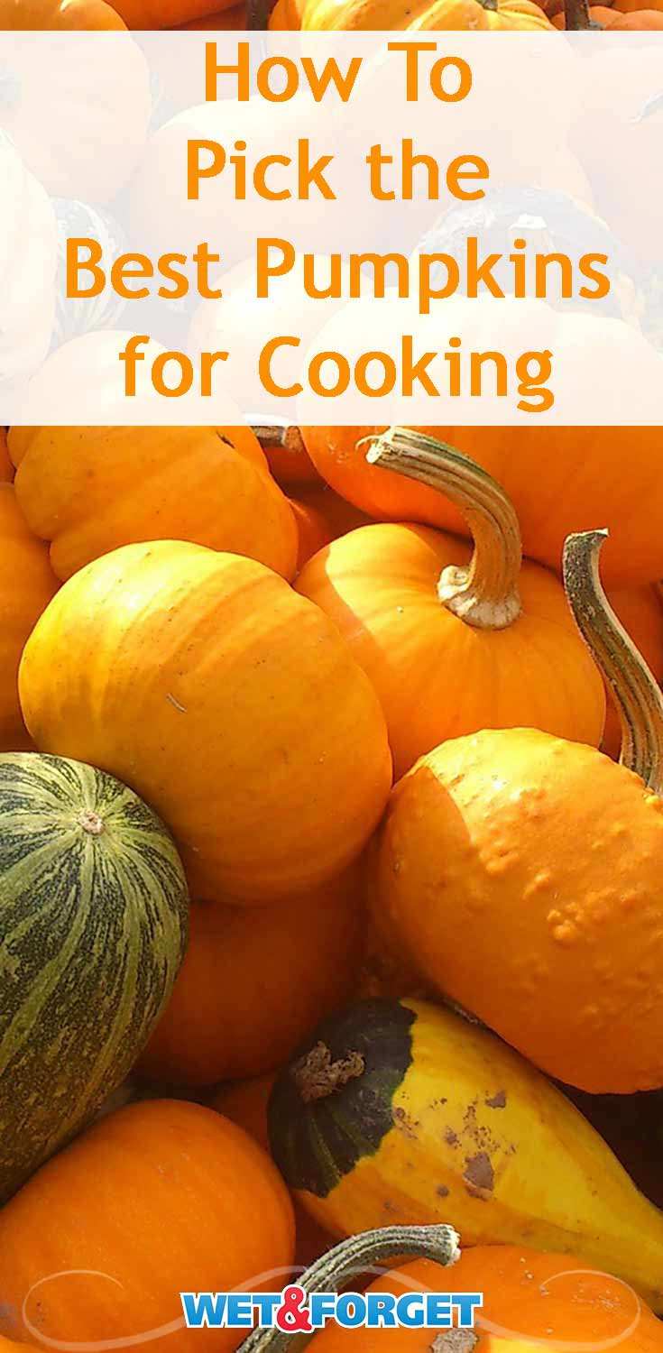 Use our guide to pick the best pumpkin for your fall cooking!