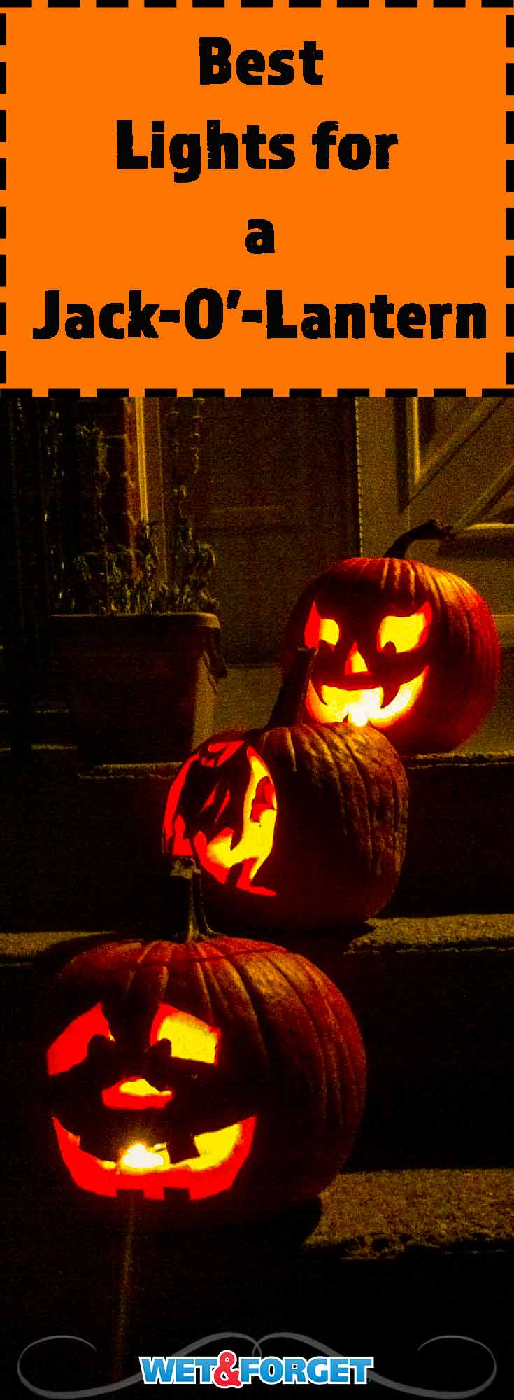 It can be tricky trying to find the best light to illuminate your pumpkin. Discover the best option for your jack-o'-lantern with our guide!