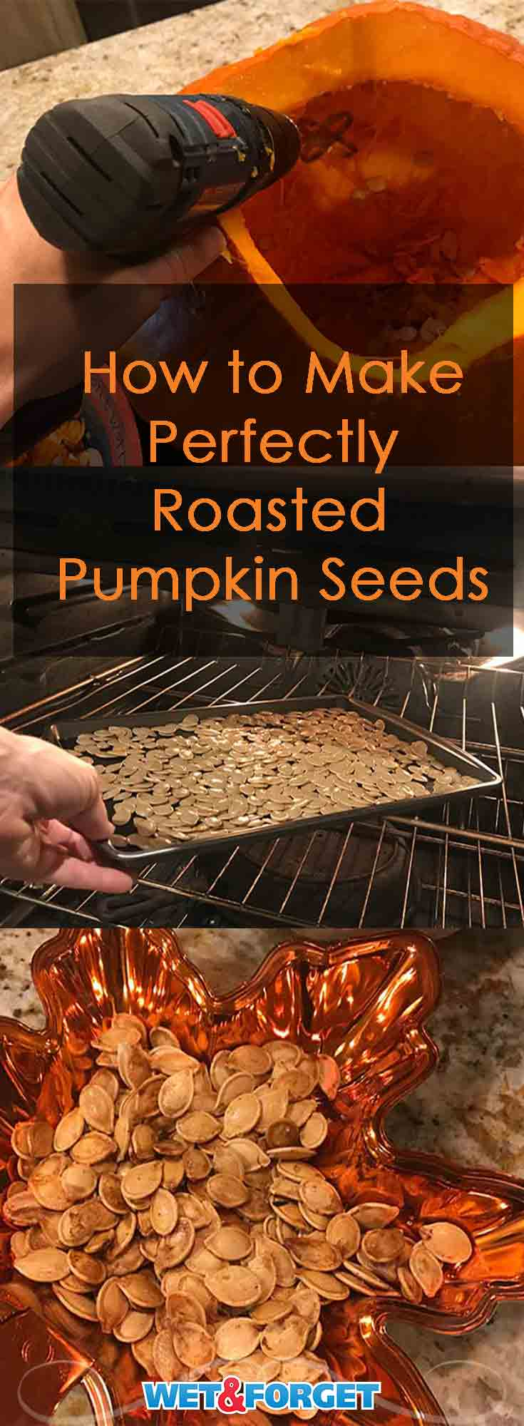 Roasted pumpkin seeds are the highlight of the fall season! Read our step-by-step tutorial on how to make the best roasted pumpkin seeds.