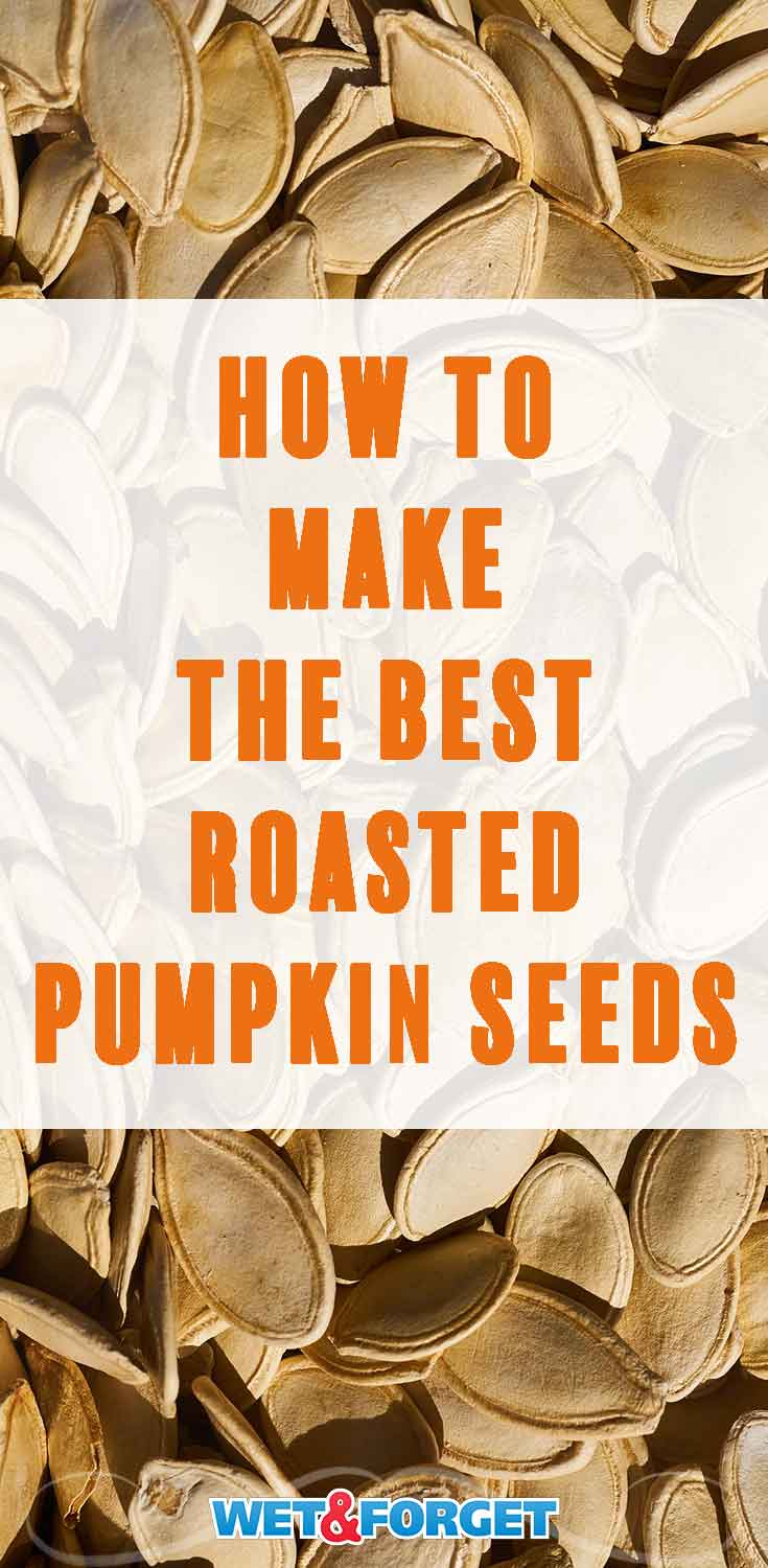 Pumpkin season is here! Learn how to make roasted pumpkin seeds with our favorite recipe.