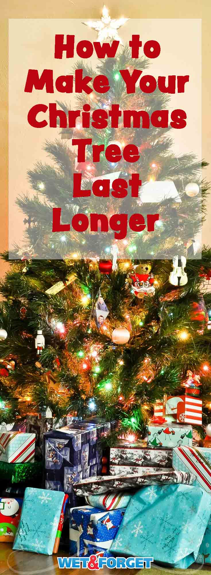 christmas trees can become brittle and dry out too quickly use these tips to make - How Long Can A Christmas Tree Last