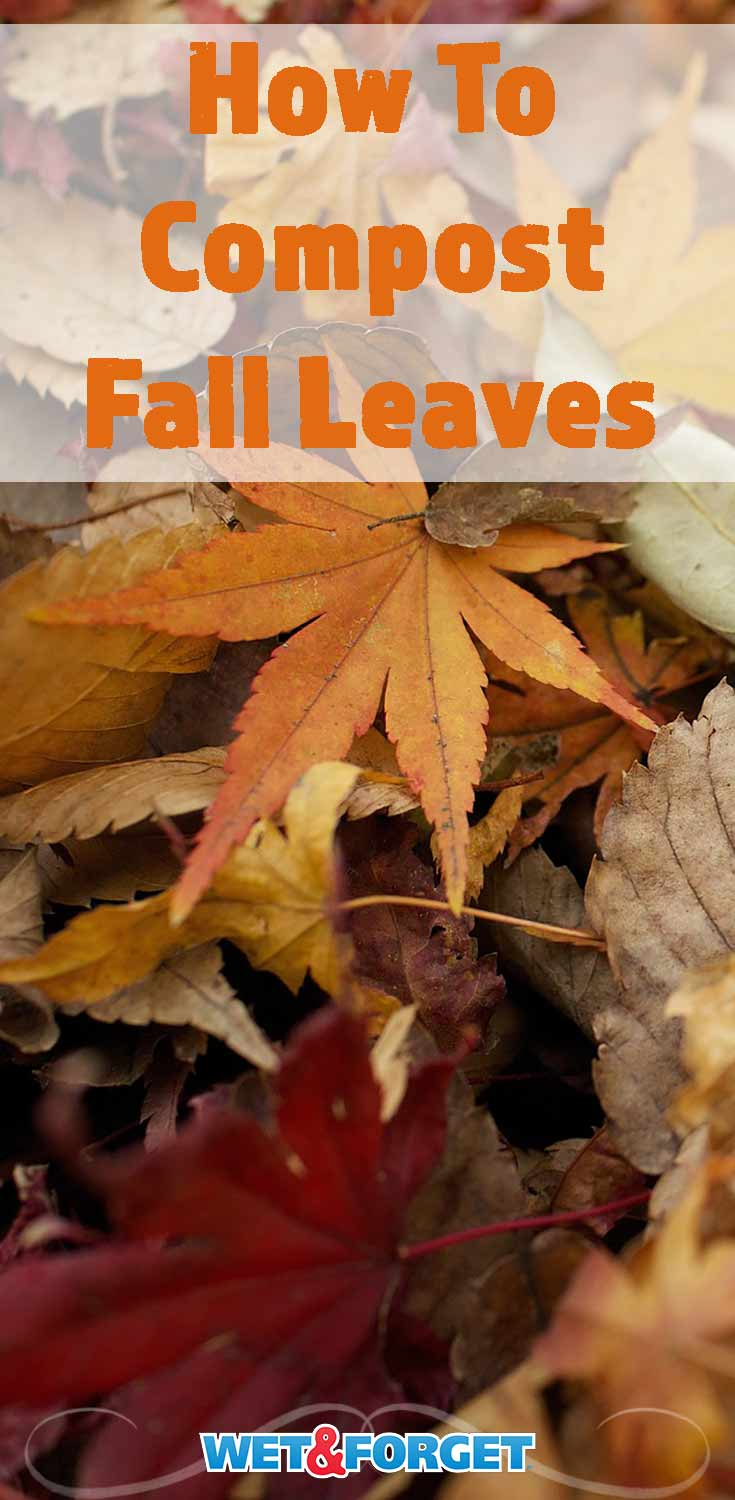 Put the fall leaves in your backyard to good use! Find out how to compost fall leaves with our guide.