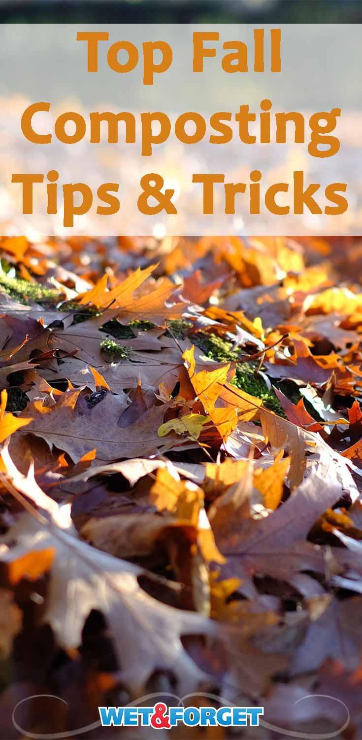 Thinking of composting this fall? Learn the best tips for composting leaves with our guide.