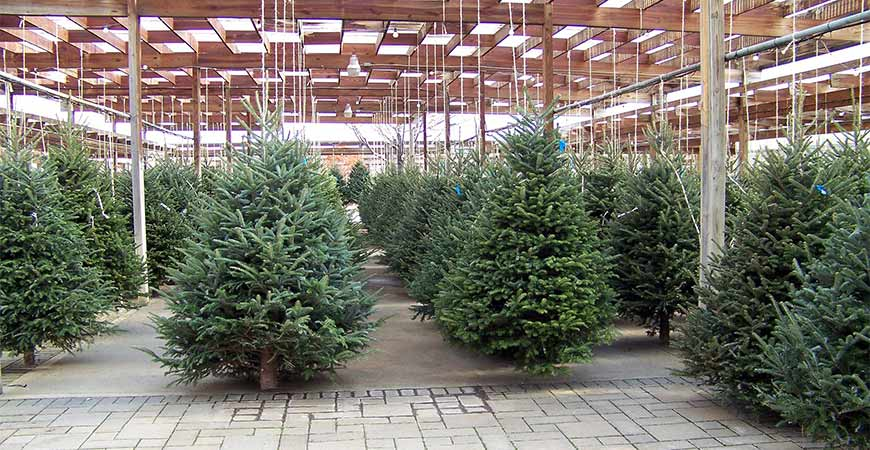 Pick out the right type of Christmas tree for your home.