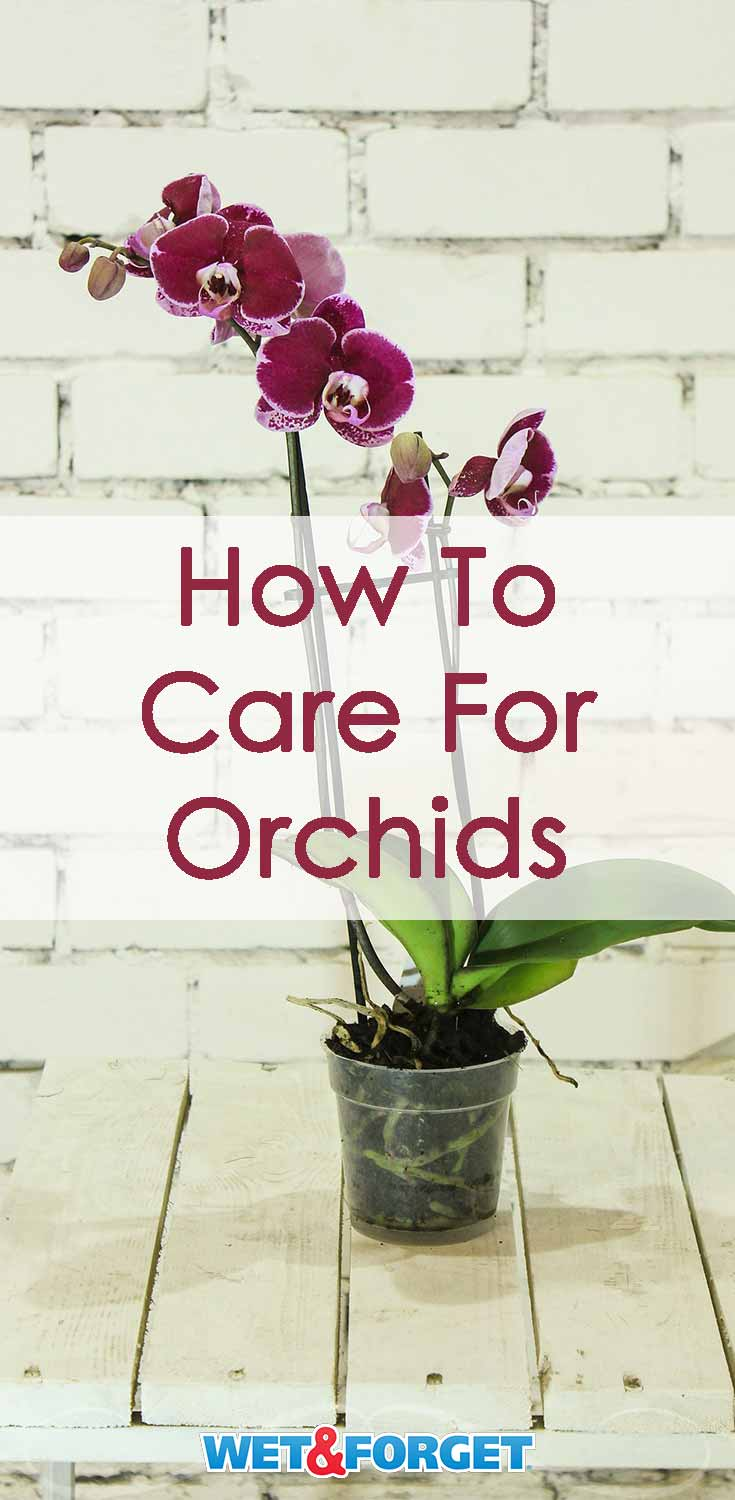 Discover the top tips and tricks on caring for orchids inside your home!