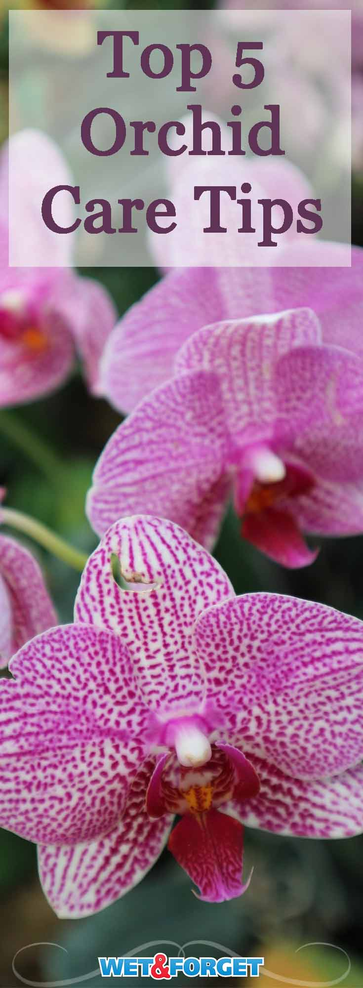 Orchids make a beautiful indoor plant! Learn how to keep your orchid healthy with these 5 tips!