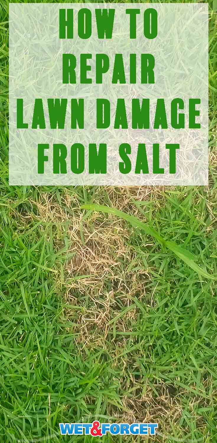 Does your lawn have damage after the rough winter season? Find out how to fix it with our guide!