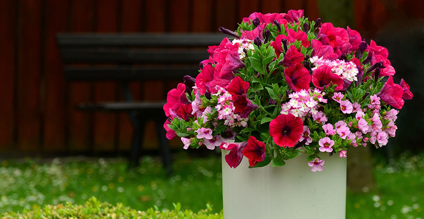 Petunias make a great bright bloom to add to your porch.