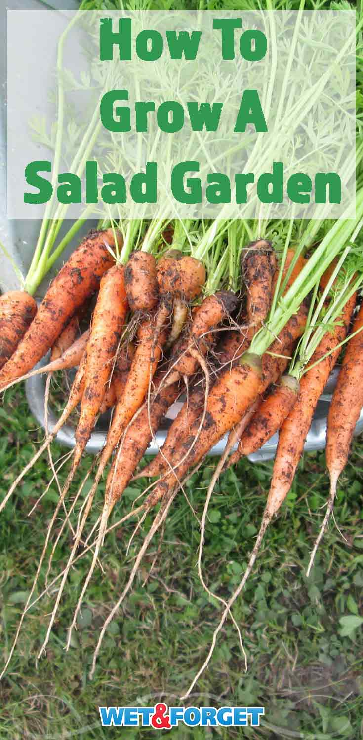 Enjoy fresh and delicious vegetables by starting a salad garden in your backyard! Follow these quick tips and tricks to grow a successful salad garden.