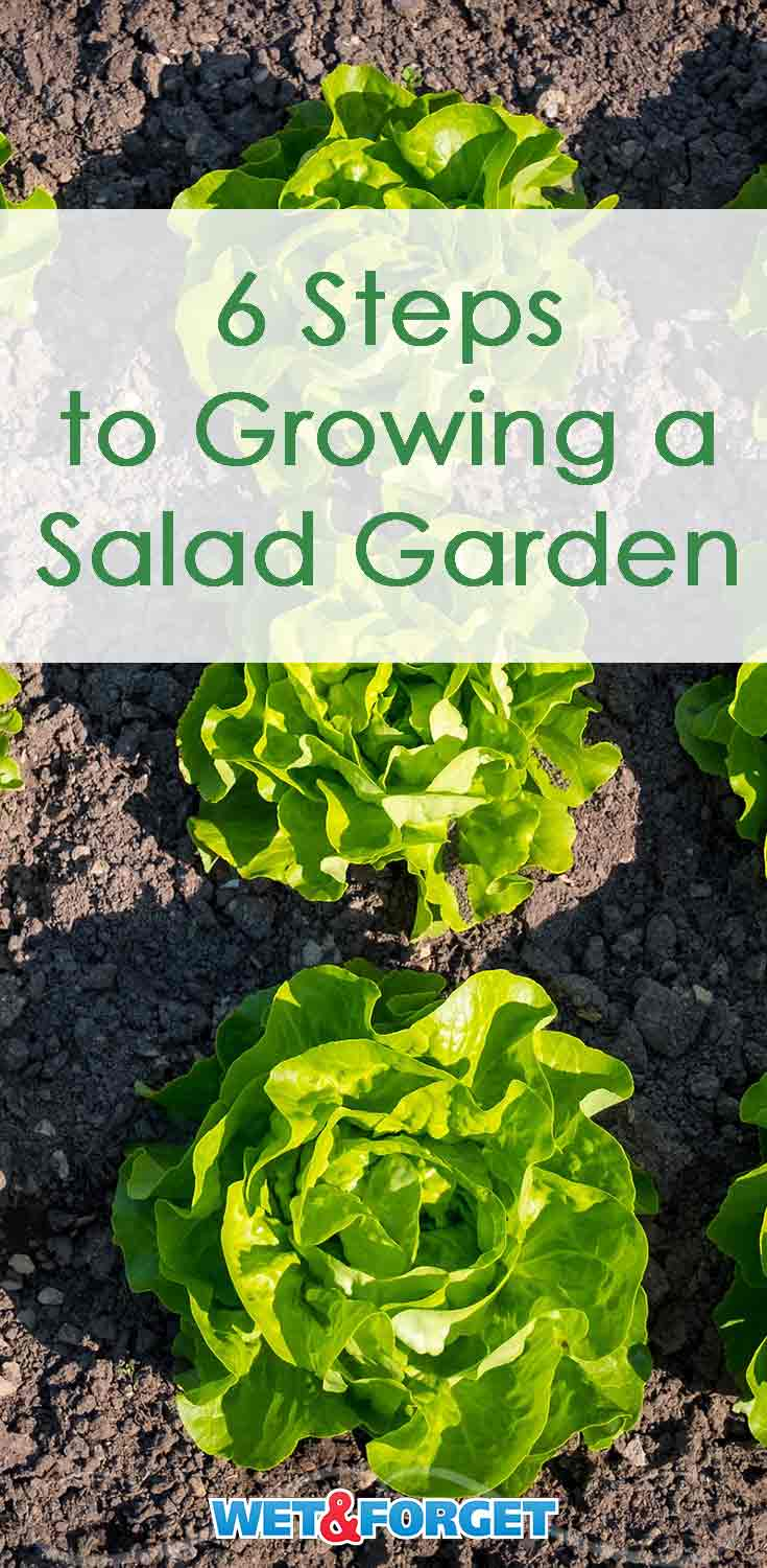 Follow these 6 simple steps to grow a salad garden in your backyard!