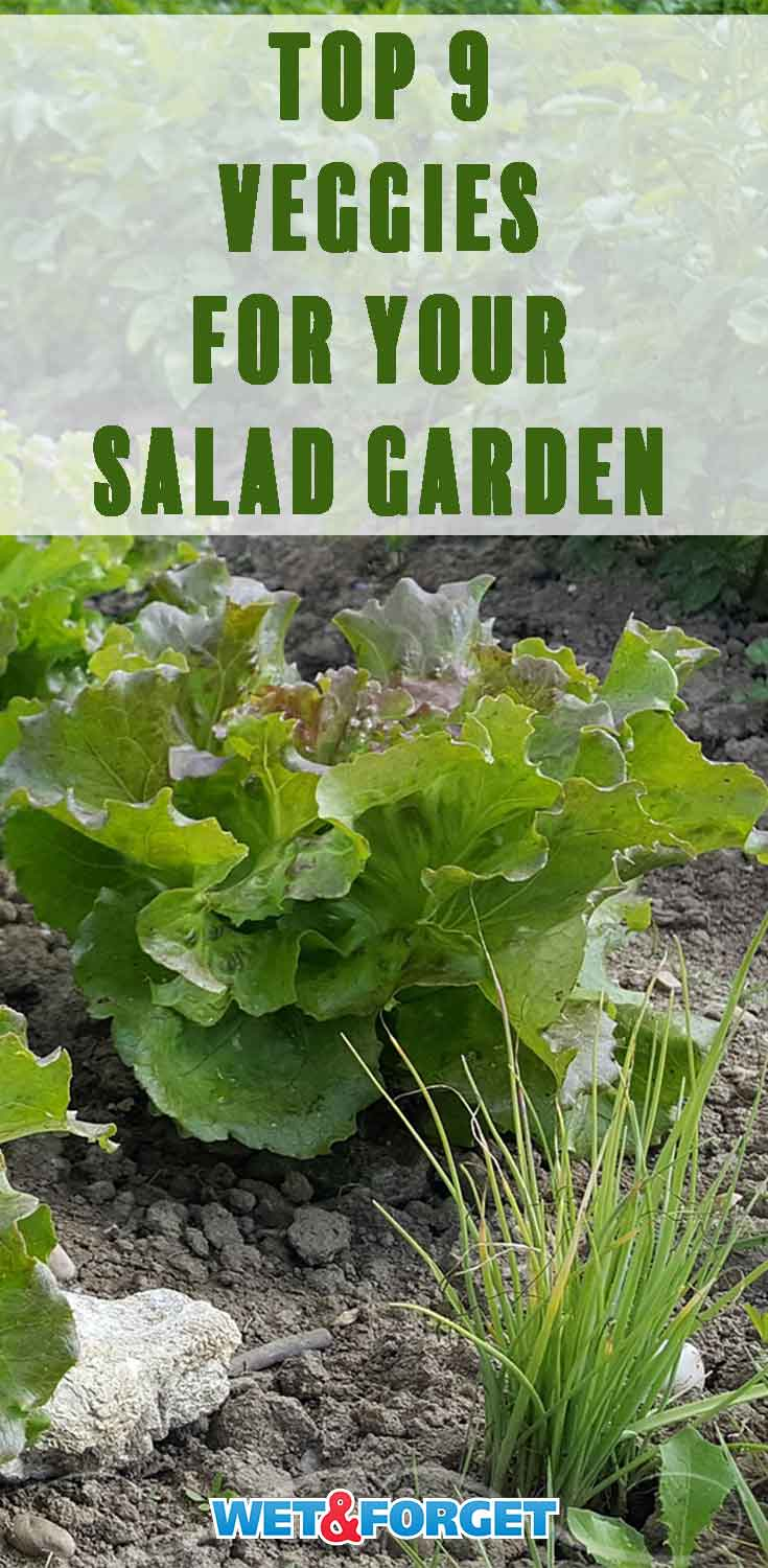 Plant the best salad garden in your backyard by adding these 9 veggies!
