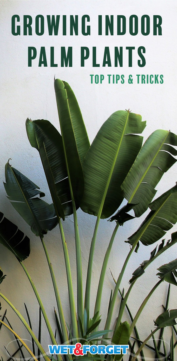 Ask Wet & Forget Secrets to Growing Indoor Palm Plants | Ask Wet