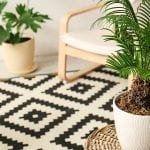 Secrets to Growing Indoor Palm Plants