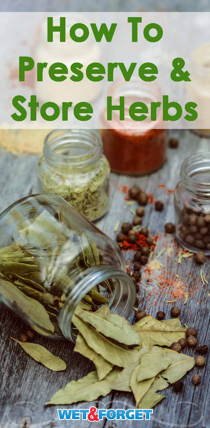 Did you just finish harvesting your herb garden? Learn how to preserve and store your herbs with our quick guide!