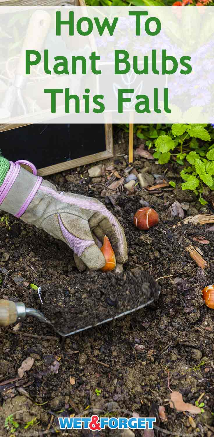 Planting bulbs this fall will be so rewarding in the spring! Learn how to plant a variety of different types of bulbs with our guide.