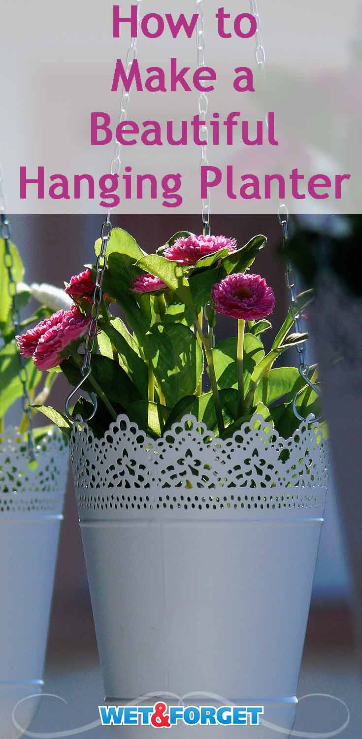 Decorate your porch with a hanging planter! Use our guide to discover which flowers would look best in your planter.