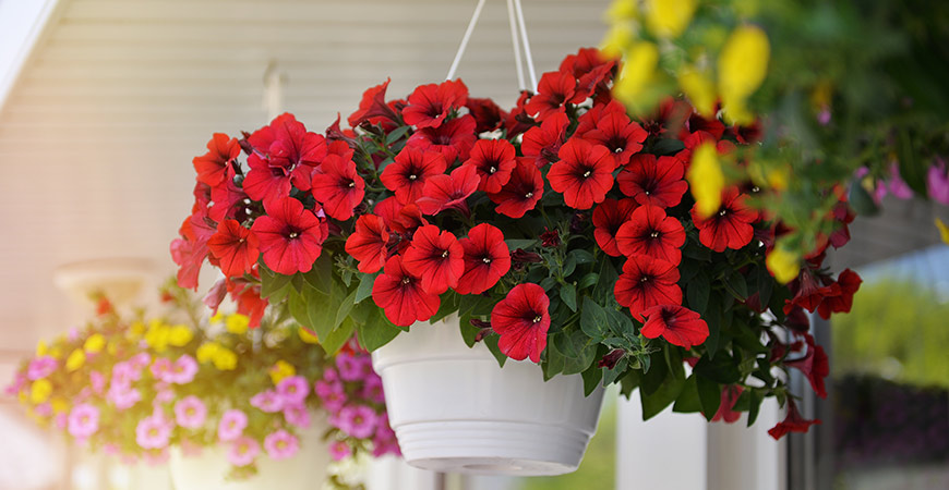 Learn how to create the perfect hanging planter for your porch!