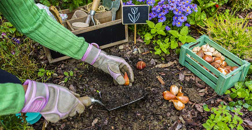 Learn how to plant sping blooming bulbs this fall with these steps
