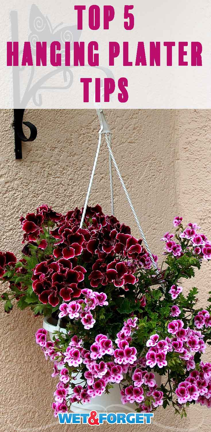 Decorate your porch with the best hanging planter on the block by following these 5 tips!