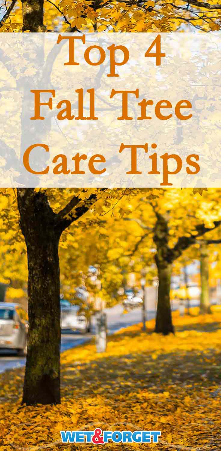 Prepare your trees for the upcoming cool weather with these 4 fall tree care tips!