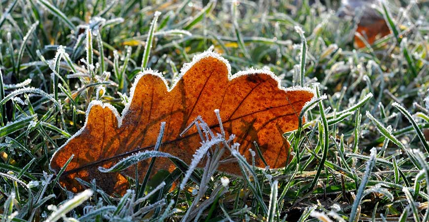 Leaf and grass covered in frost