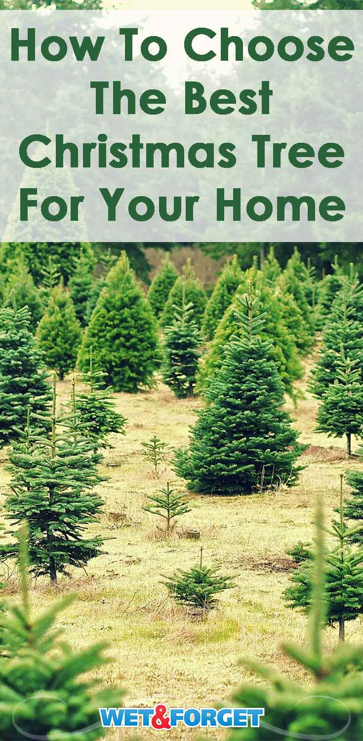 Stuck last minute Christmas tree shopping? Pick the best one for your home using our helpful guide!