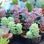 Easy Succulents for Beginners and How-tos for Indoor Gardeners