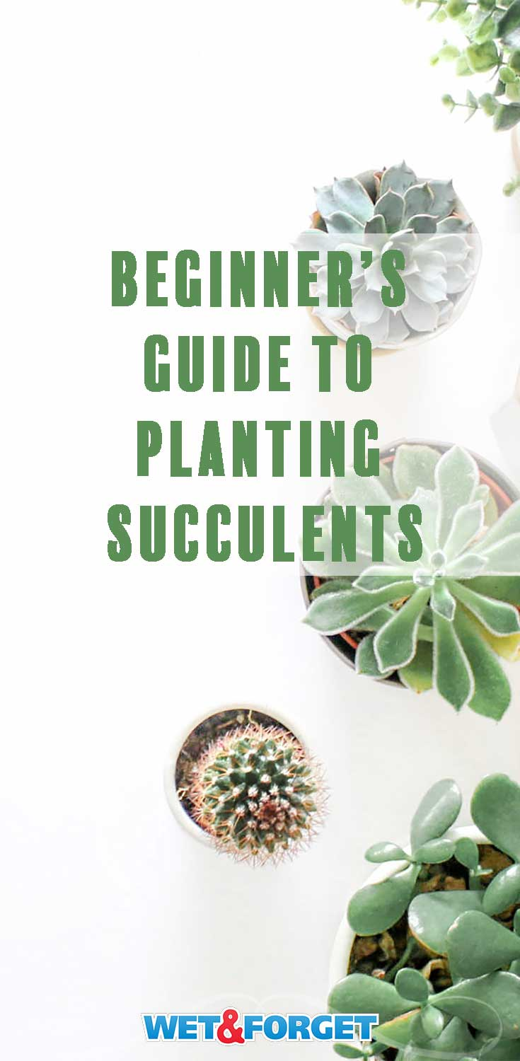 Use our guide to make sure your succulents are planted properly and learn a few extra succulent care tips!