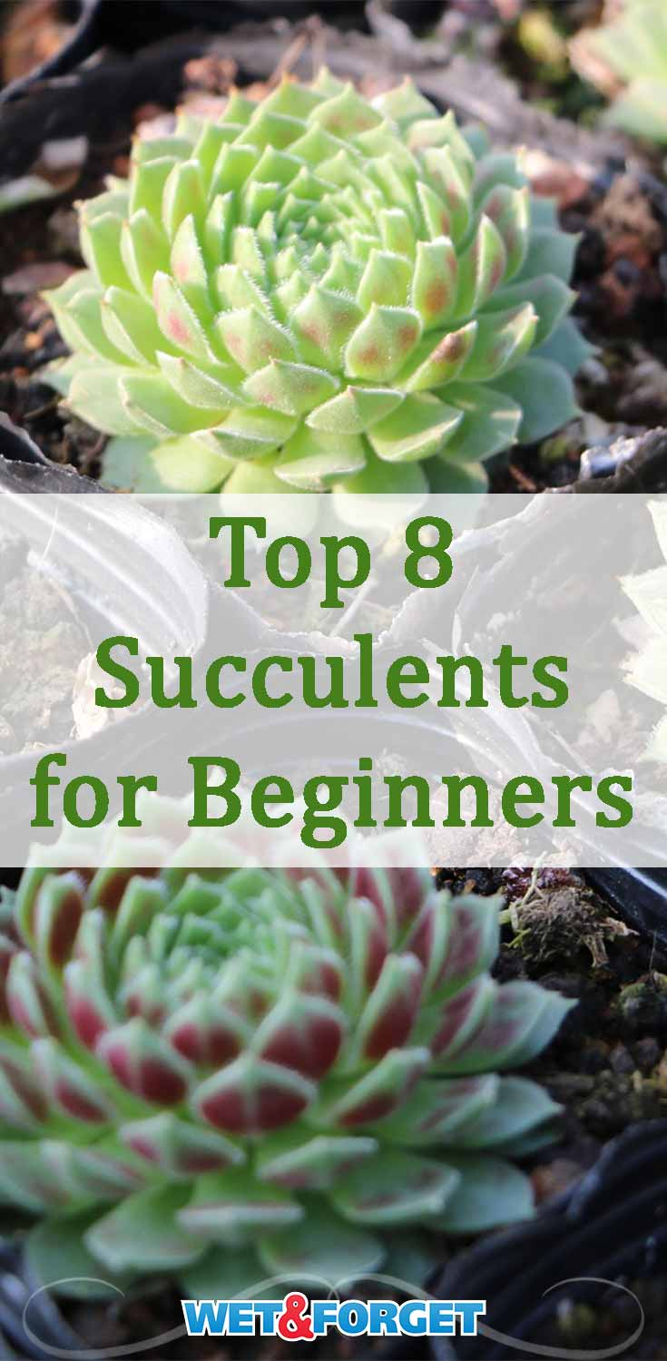 Start off your succulent garden on the right foot by growing these easy succulents!
