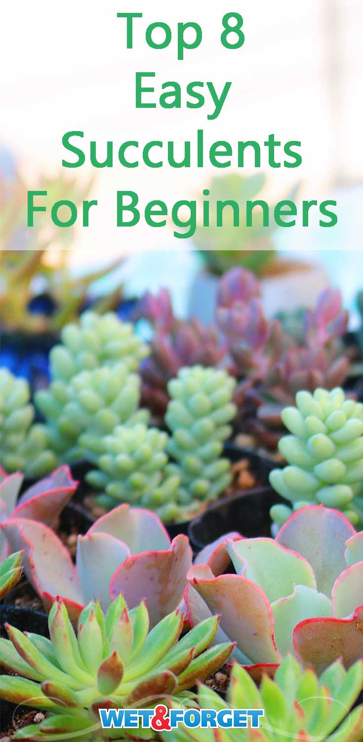 Planning to start an indoor garden this year? Check out these 8 easy to care for succulents!