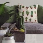 Quick Tips & Tricks to Style Your Indoor Plants