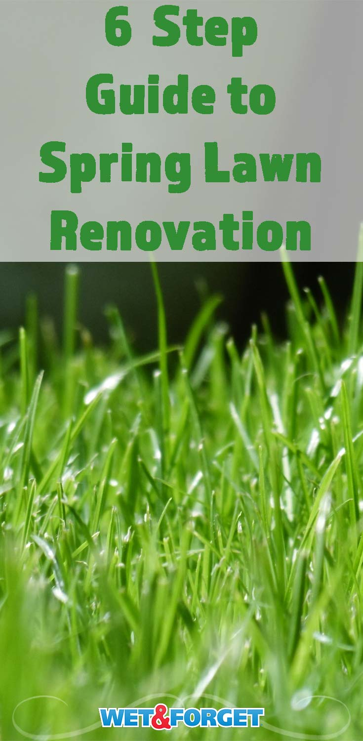 Learn how to get your lawn in good shape for the warmer months with our spring lawn renovation guide!
