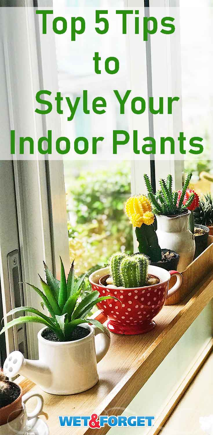 Pick out the best spot and container for your indoor plants with these quick tips and tricks!